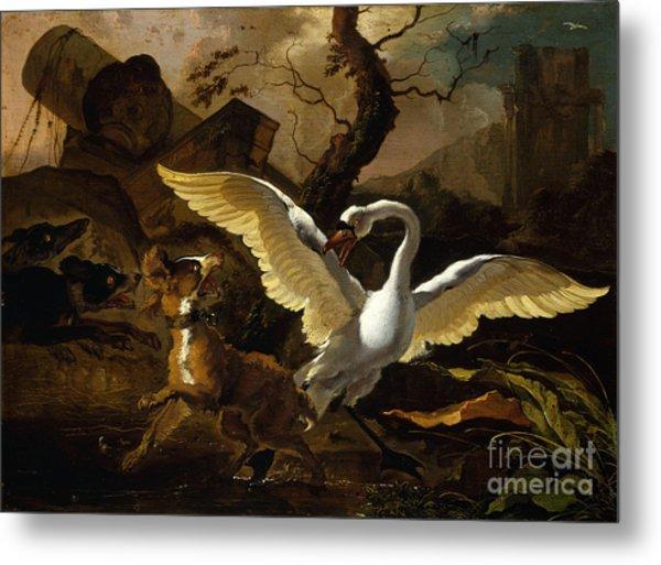 A Swan Enraged By Hondius Metal Print