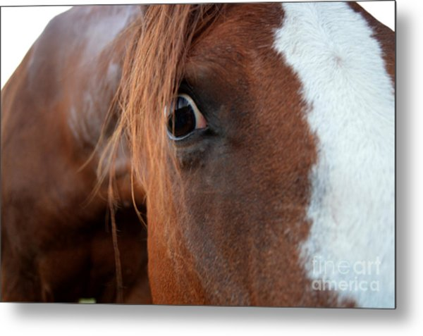 A Sweetheart's Hello Metal Print by Catherine Peterson