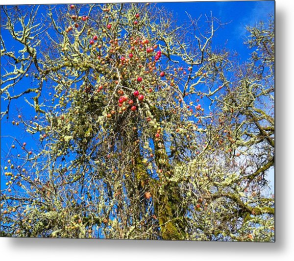 A Tangle Of Apple And Oak Metal Print