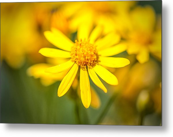 Texas Wildflower 2 Metal Print
