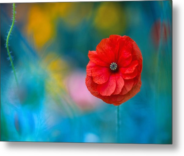 A Touch Of Poppy Magic Metal Print