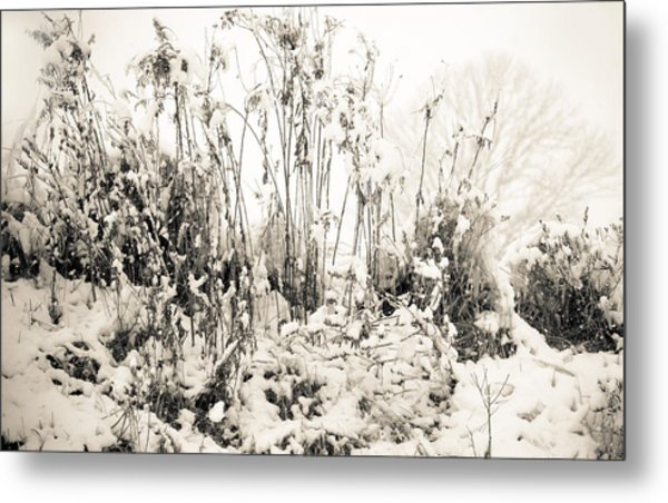 A Touch Of Snow Metal Print by Nancy Edwards