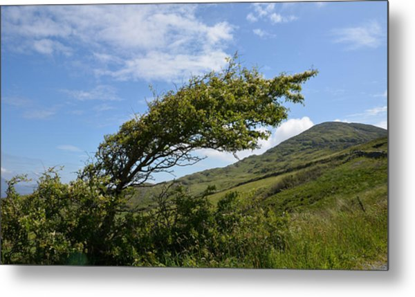 A Tree Bent By The Wind Metal Print