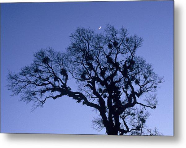 A Tree Is An Object Of Beauty X Metal Print