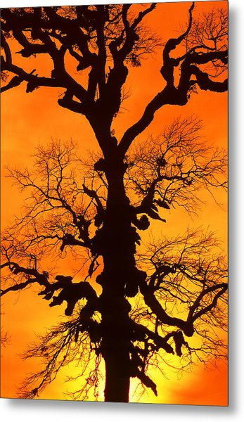 A Tree Is An Object Of Beauty Xii Metal Print