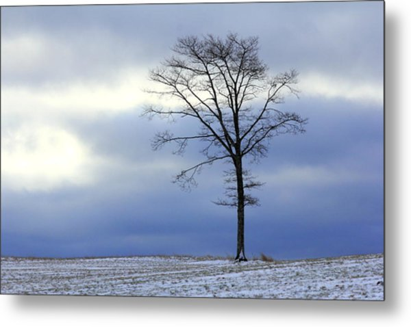 A Tree On A Field Of Snow Metal Print