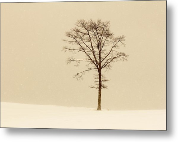 A Tree On A Hill In A Snow Storm Metal Print