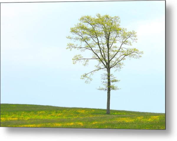 A Tree On A Hill Of Wildflowers Metal Print