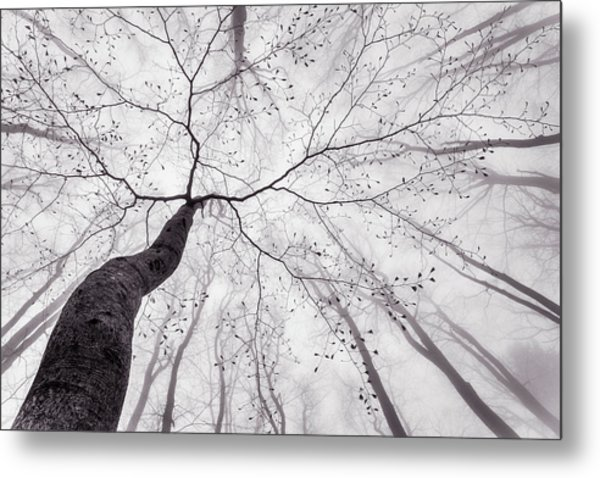 A View Of The Tree Crown Metal Print