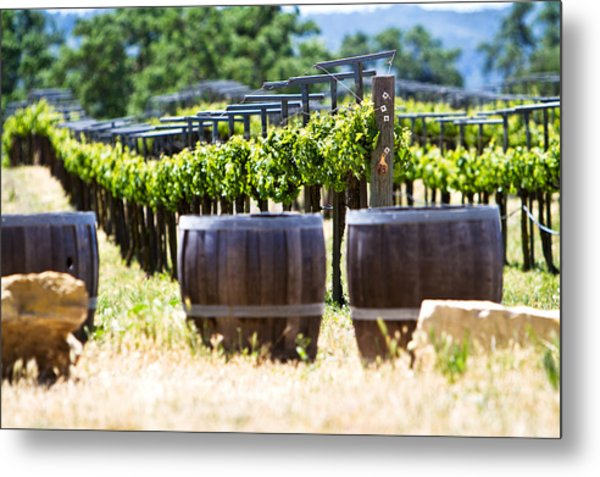 A Vineyard With Oak Barrels Metal Print