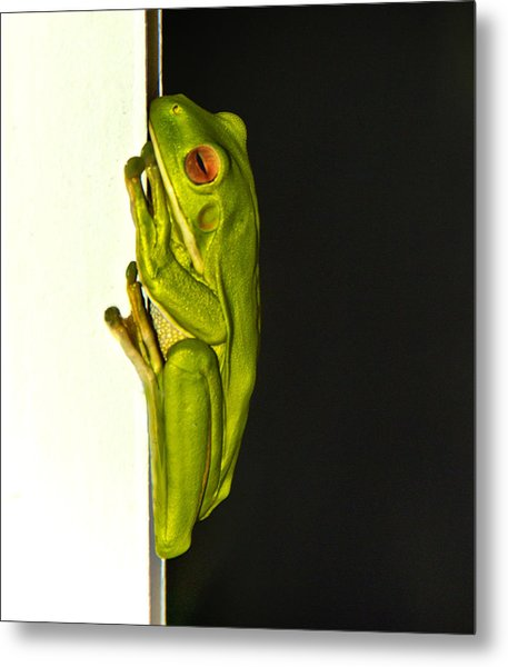 A Visit From A Giant Tree Frog Metal Print by Debbie Cundy