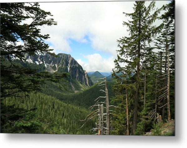A Vista - Mt. Rainier National Park Metal Print