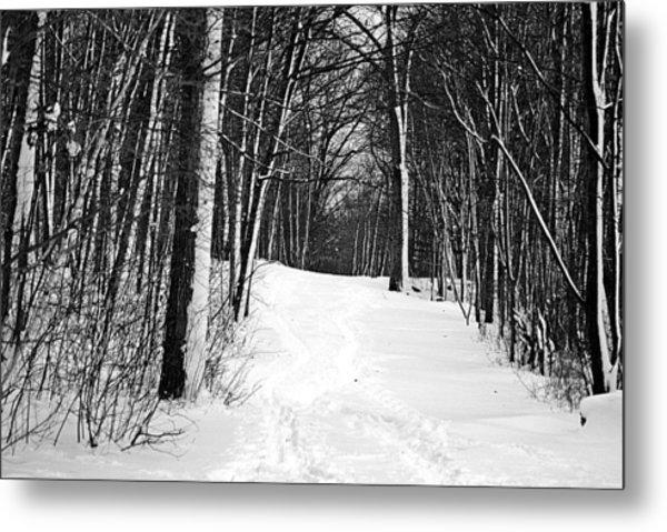 A Walk In Snow Metal Print