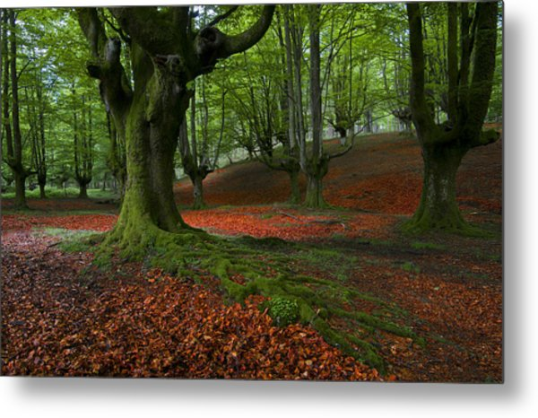 A Walk In The Forest Metal Print by Marilar Irastorza