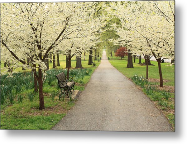 A Walk In Tower Grove Metal Print