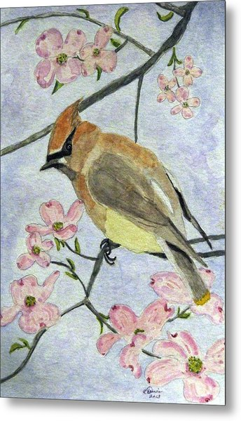 A Waxwing In The Dogwood Metal Print