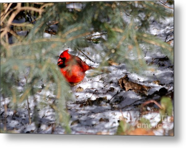 A Winter's Day Metal Print by Jay Nodianos