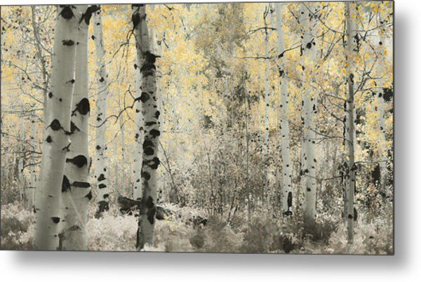 A Wisp Of Gold Metal Print
