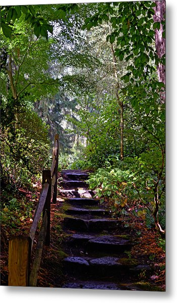 A Wooded Path Metal Print