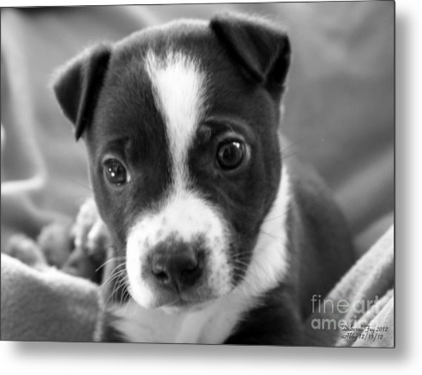 Abby The Rescued Dog Metal Print