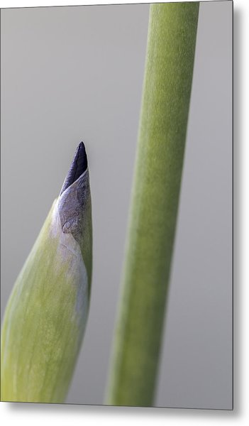 About To Unfurl Metal Print