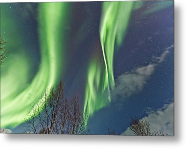 Above The Trees Metal Print by Frank Olsen