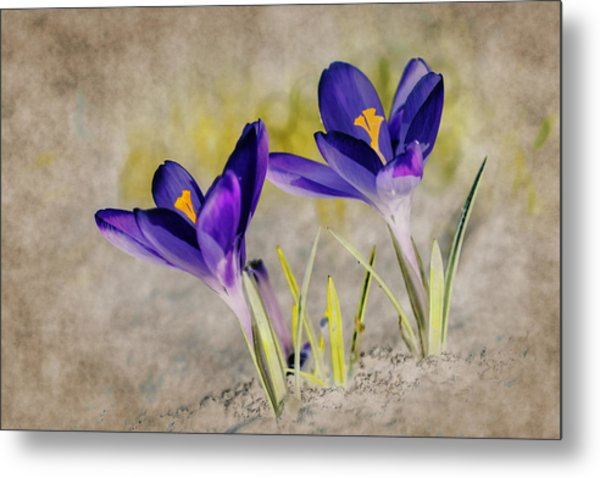 Abstract Crocus Background Metal Print