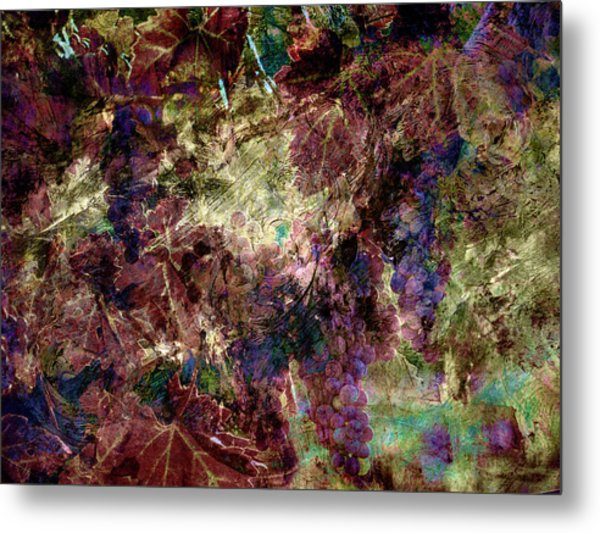 Metal Print featuring the photograph Abstract Grapes On Vine Number Four by Bob Coates