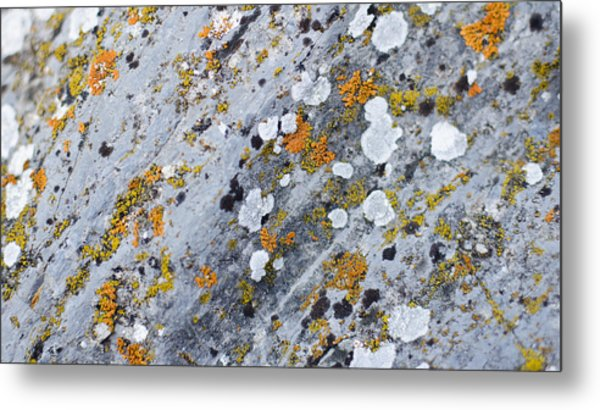 Abstract Orange Lichen 2 Metal Print by Chase Taylor