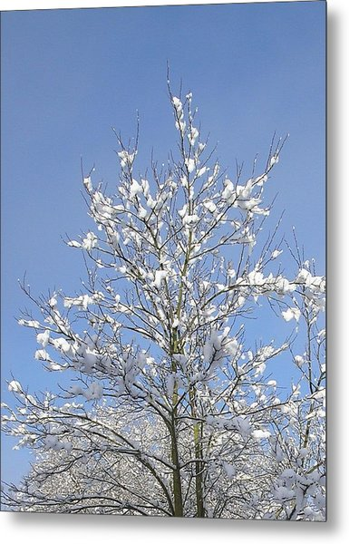 Ash Tree In Winter Metal Print