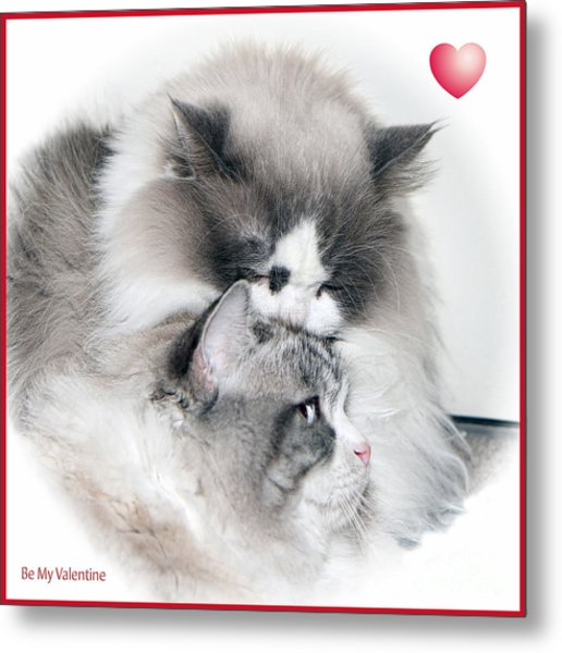 Affectionate Felines Metal Print