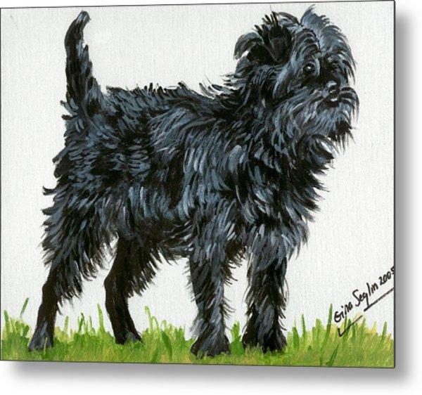 Affenpinscher Dog Metal Print by Olde Time  Mercantile