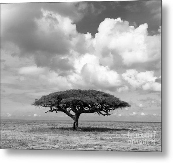 African Acacia Tree Metal Print