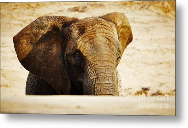 African Elephant Behind A Hill Metal Print