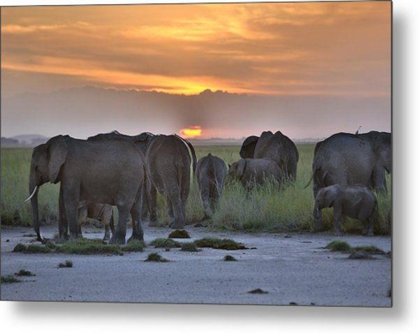 African Elephants At Sunset Metal Print by 1001slide