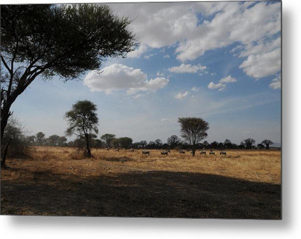 African Series Clouds Metal Print by Katherine Green