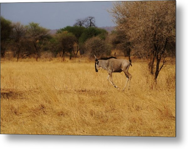 African Series Grass Metal Print by Katherine Green