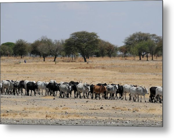 African Series Metal Print by Katherine Green