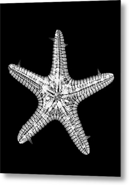 African Star Metal Print by William A Conklin