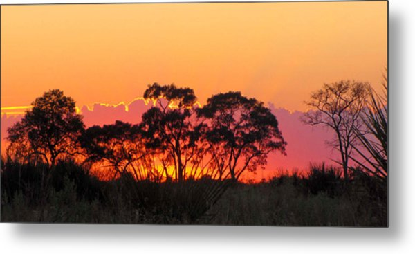 African Sunrise Metal Print by Karen E Phillips