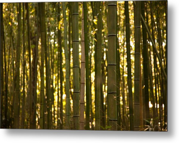 Afternoon In Sagano Metal Print