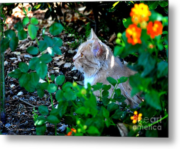Afternoon Nap Interrupted Metal Print