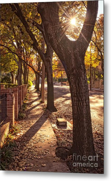 Afternoon Walk Metal Print