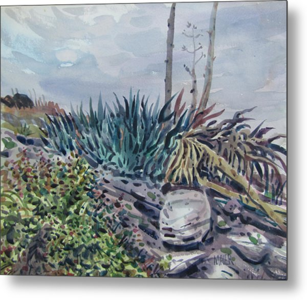 Agave Metal Print by Donald Maier