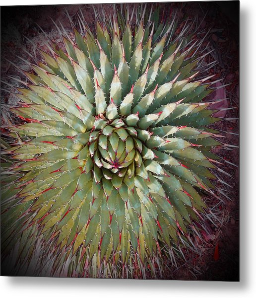 Agave Spikes Metal Print