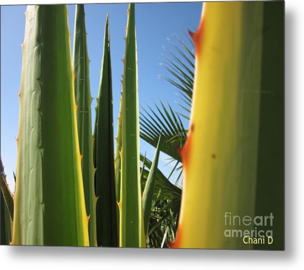 Agaves And Palm Trees Metal Print