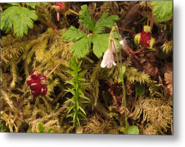 Alaskan Forest Floor Metal Print