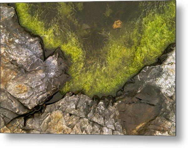 Algae Pool Abstract Photo Metal Print by Peter J Sucy