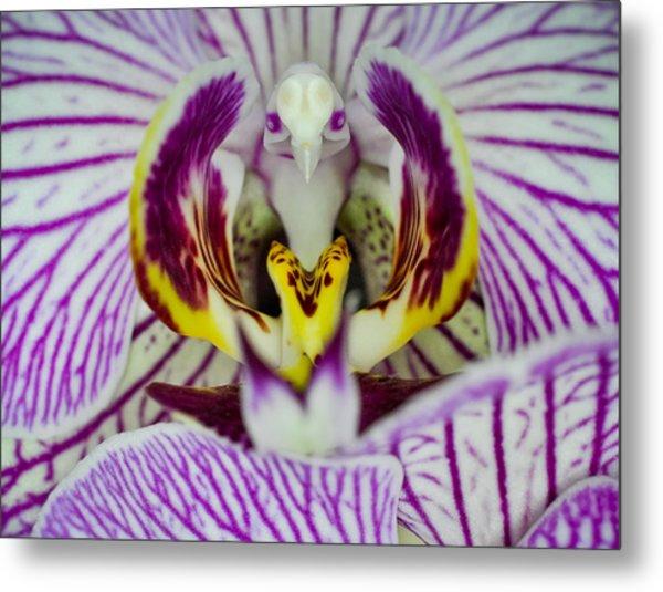 Alien Moth Orchid Metal Print