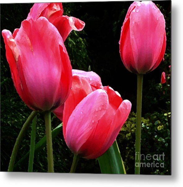 All About Tulips Victoria Metal Print